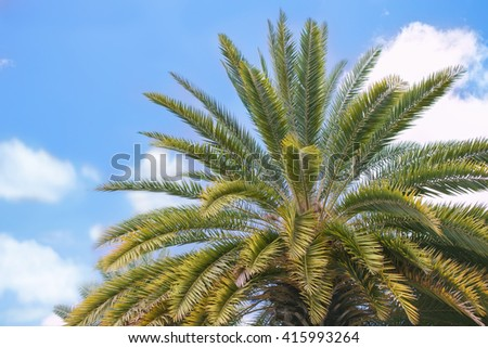 top view of big lush palm tree on blue sky background - stock photo