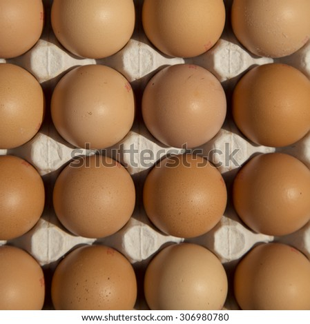 Top view of brown egg in cardboard - stock photo