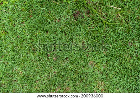 Top view of close up green grass