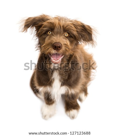 Top view of Crossbreed, 5 months old, sitting and looking at camera against white background - stock photo