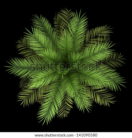 top view of date palm tree isolated on black background - stock photo