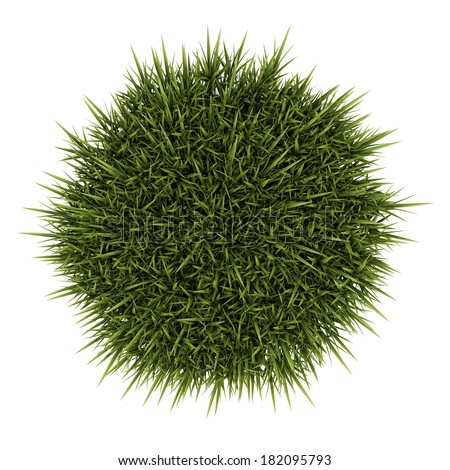 Simple best ornamental grass top view decorative grass isolated on stock illustration 182095793 top view of decorative grass isolated on workwithnaturefo