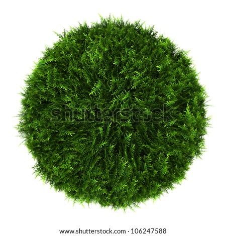 top view of eastern arborvitae bush isolated on white background - stock photo
