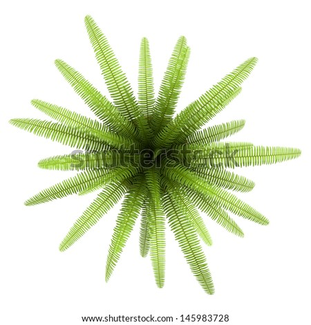 top view of fern plant in pot isolated on white background - stock photo