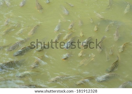 Top view of fish  - stock photo