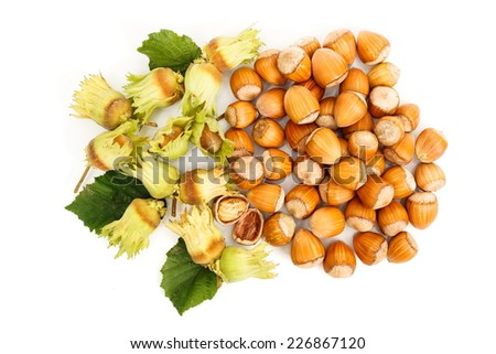 Top view of fresh hazelnut clusters and whole nuts - stock photo