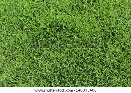 Top View of Green Grass Texture.