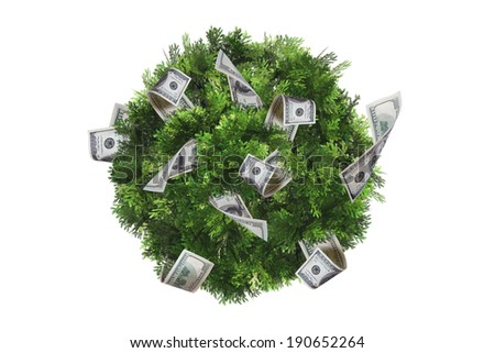 Top view of green natural tree with one hundred dollar banknotes, isolated on white background.