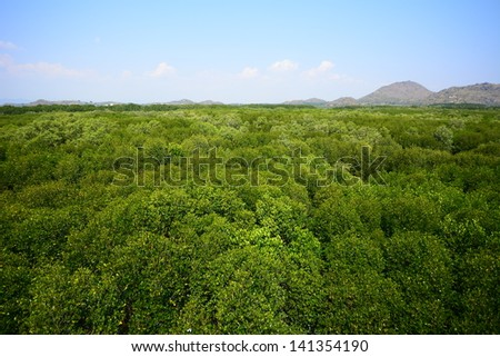 Top View of Mangrove Forest - stock photo