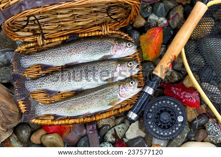 Top view of native wild trout, inside of fishing creel, with fly reel, pole and late autumn leaves on wet river bed stones - stock photo
