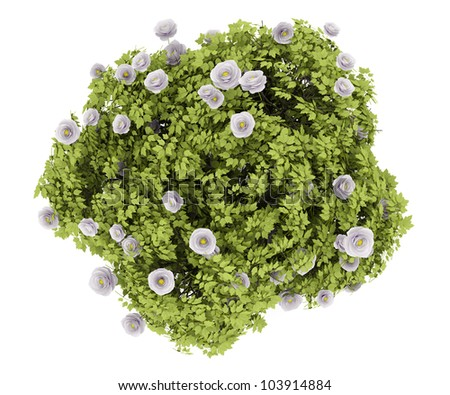 top view of peony bush isolated on white background - stock photo