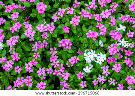 Top view of pink and white flowers background - stock photo