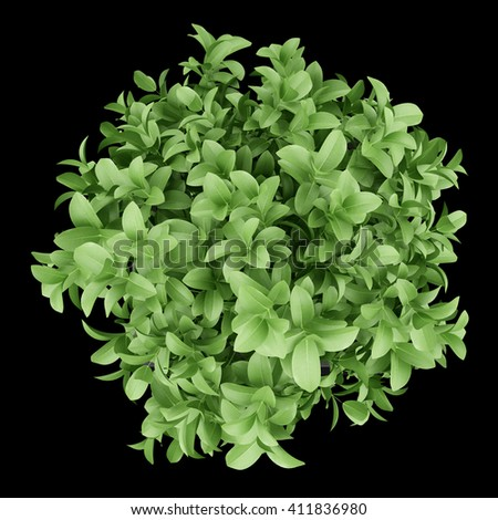top view of plant in black pot isolated on black background. 3D illustration - stock photo