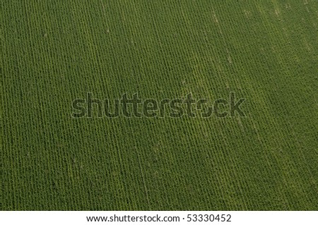 top view of potato Field in Israel - stock photo