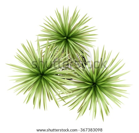 top view of potted palm tree isolated on white background - stock photo