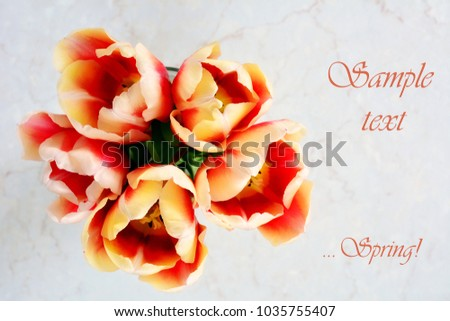 Top view of red and yellow tulips on neutral backgound with room for text and shot in natural light