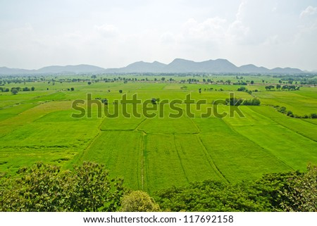 Top view of rice field - stock photo
