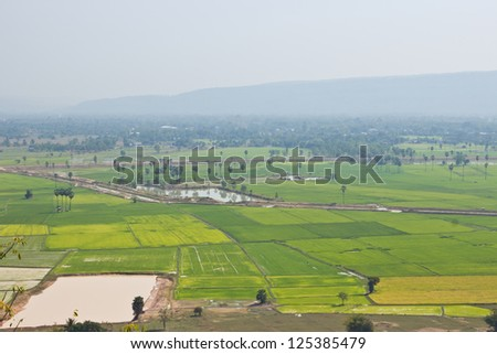 Top View of Rice Field surrounded by mountains and fog in the morning.