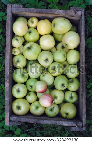 Top view of ripe beautiful green apples in gray wooden box. Good texture.