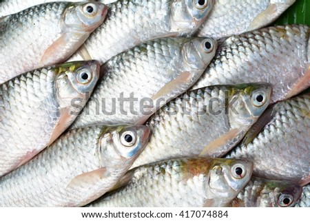 top view of river fishes on green leaf background