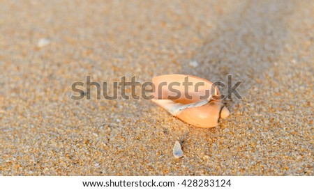 Top view of shell on the sandy beach texture outside background - stock photo