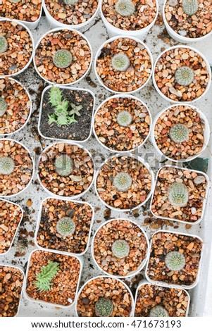 Top view of small cactus in a row, Used for background