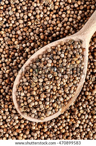 Top view of spoon full of dried coriander seeds Coriandrum sativum is on coriander seed background.