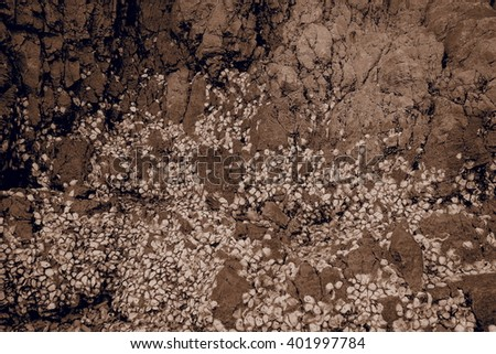 top view of stone and shell background with gentle sepia tone