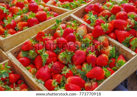 Top view of tasty ecuadorian strawberries freshly collected on many wooden box