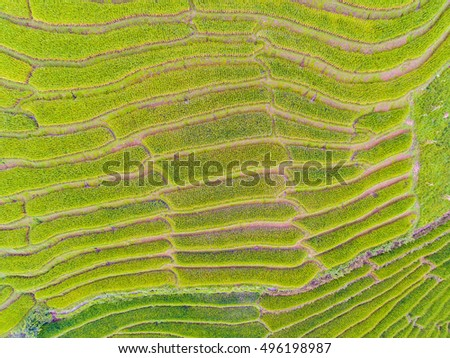 Top View of Terraced Rice Field in Hill, Chaingmai, Thailand