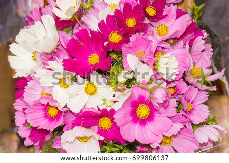 Top view of the bouquet of a cosmos flowers different colors closeup