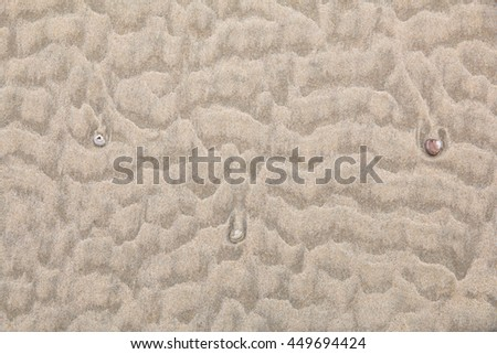 Top view of the sandy beach with sea shells - stock photo