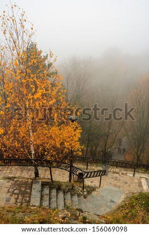 top view of the yellowed tree and climbing steps in foggy autumn park