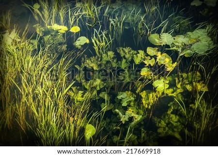 Top view of underwater river's plants 4 - stock photo