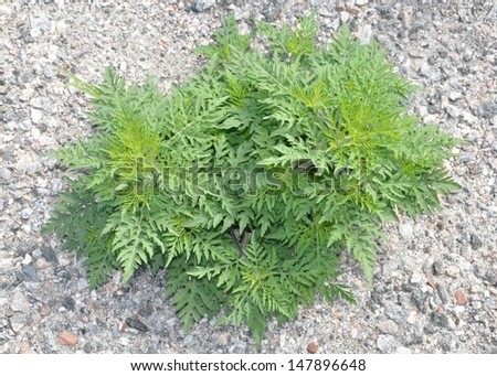 Top view of weeds - stock photo
