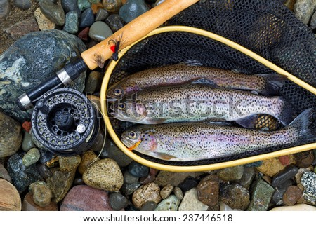 Top view of wild trout, inside of landing net, with fishing fly reel, pole and assorted flies on wet river bed stones - stock photo