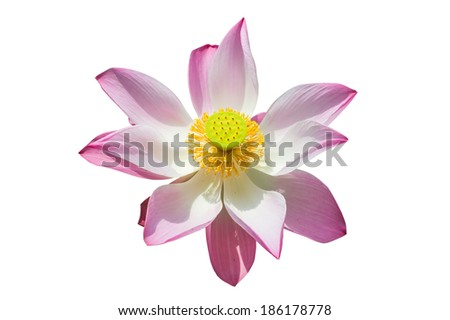 top view pink lotus, water lilly isolated white background with clipping path - stock photo