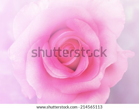 top view pink soft rose flower background