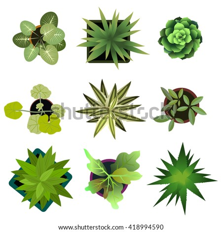 Top view. plants Easy copy paste in your landscape design projects or architecture plan. Isolated flowers on white background. Graphic illustration - stock photo