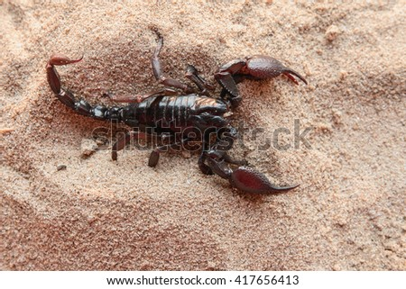 top view Scorpion on the Sand