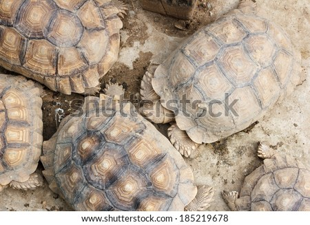 Top view Tortoise, Land turtle - stock photo