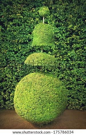 Topiary - stock photo