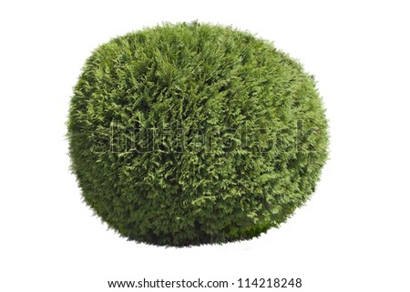 Topiary bush isolated over white background - stock photo