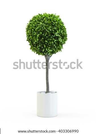 Topiary trees in the pot isolated on white background. 3D Rendering, 3D Illustration. - stock photo