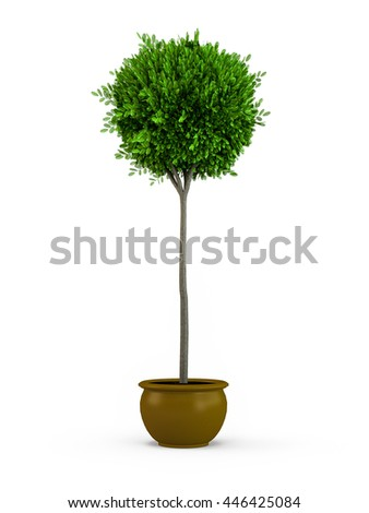 Topiary trees in the pot isolated on white background. 3D Rendering, Illustration. - stock photo