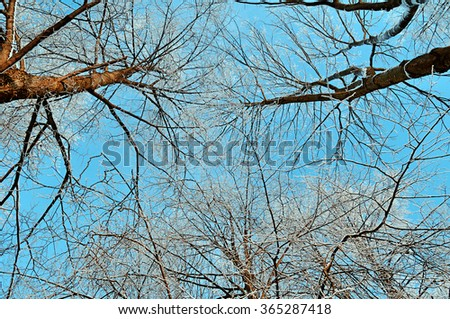 Tops of frosty winter trees against cloudy sky in sunny winter day - winter  picturesque landscape  - stock photo