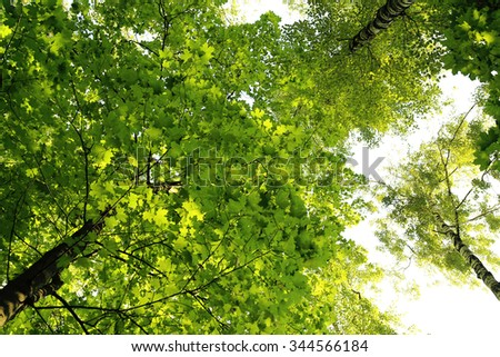 Tops of green summer trees on sky background - stock photo
