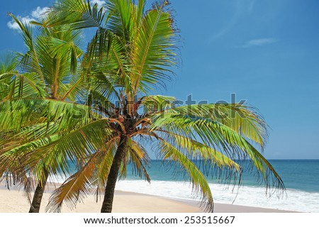 Tops of palm trees against the ocean on a sunny day