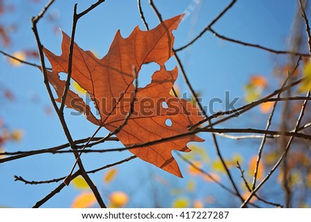 Torn leaf against a blue sky