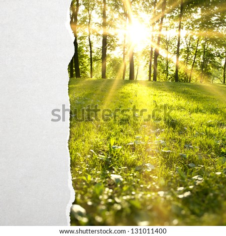 torn paper and green forest - stock photo